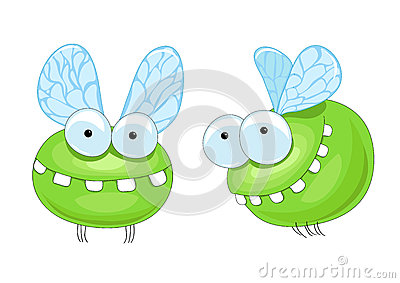 Funny insect