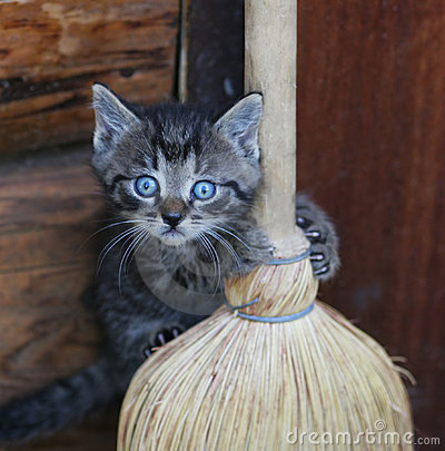 Free Funny Kitten Stock Images - 16182414