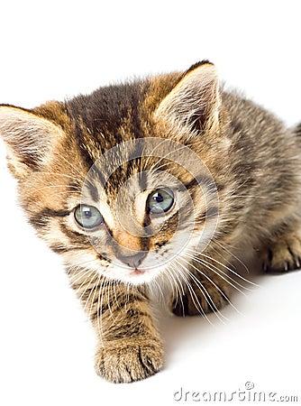 Funny kitten isolate in white