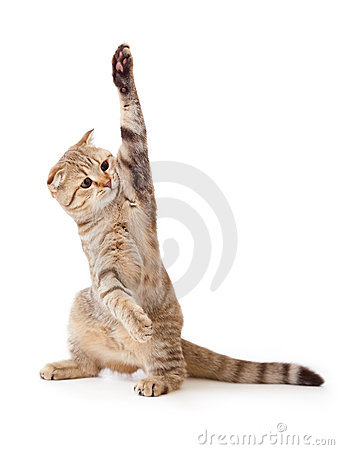 Funny kitten pointing up by one paw isolated