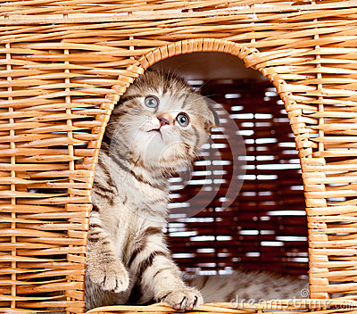 Funny kitten sitting inside wicker cat house
