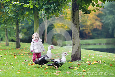 Funny little baby girl with wild ducks in autumn park
