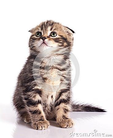 Funny little kitten