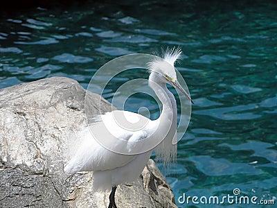 Funny-Looking Bird
