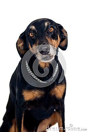 Funny mixed breed dog