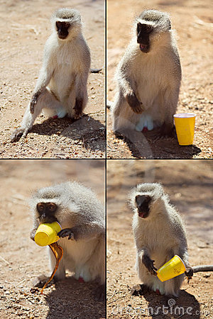 Free Funny Monkey Royalty Free Stock Image - 1735176