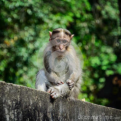 Free Funny Monkey Taken In Periyar Wildlife Sanctuary Stock Images - 51642764