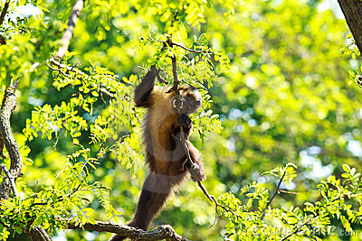 Funny monkey on tree