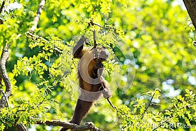 Funny monkey on tree