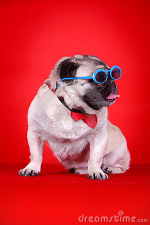 Free Funny Pet Dog Stock Photo - 5419330