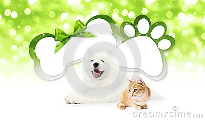 Funny pets cat and dog together with bone and paw imprint shape Stock Photo