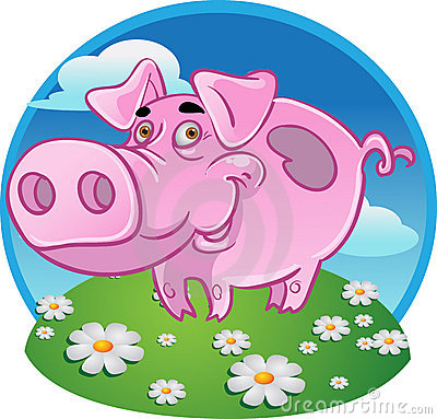 Funny pink pig on color background