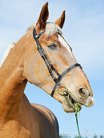 Funny portrait of palomino horse