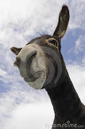 Funny Pouting or Donkey