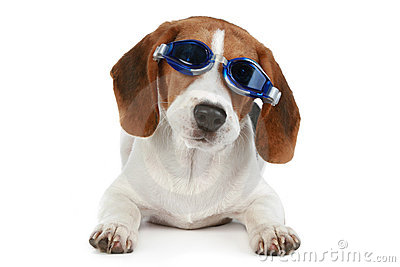 Funny puppy in blue glasses