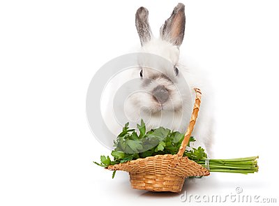 A funny rabbit with a basket of greens