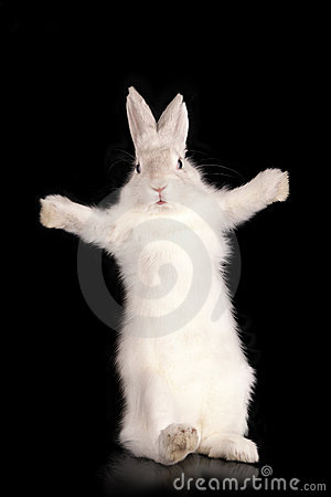 Funny rabbit with open pads
