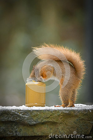 Free Funny Red Squirrel Stock Photos - 64476223