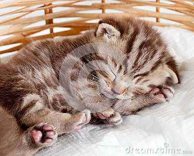 Funny sleeping baby cat pet kitten