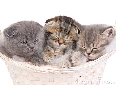 Funny sleeping kitties in basket