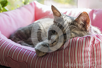 Funny sleepy cat in the soft box