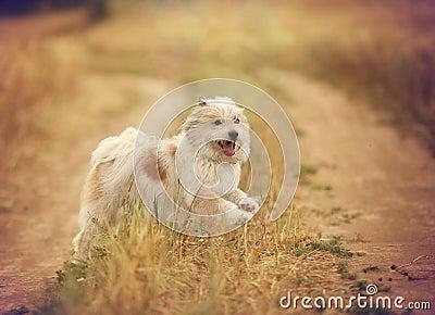 Funny smiling dog in summer