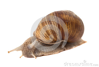 Funny snail isolated