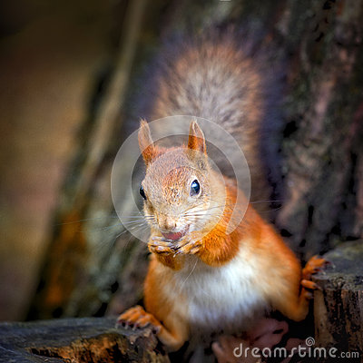 Free Funny Squirrel Royalty Free Stock Image - 28030096