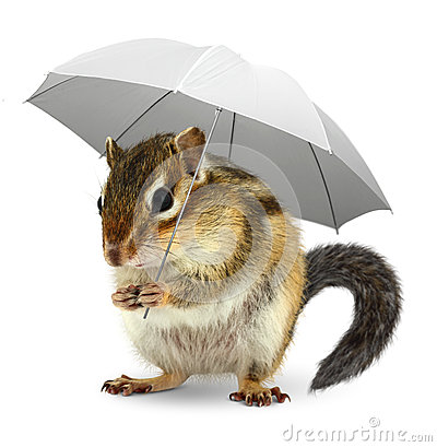 Free Funny Squirrel  Under Umbrella On White, Weather Creative Concep Royalty Free Stock Photography - 59734317