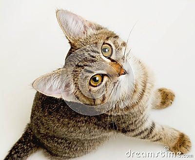 Funny striped kitten.