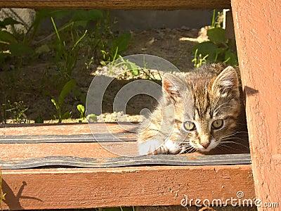 Funny striped kitten