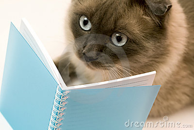 Funny surprised cat reading blank notebook