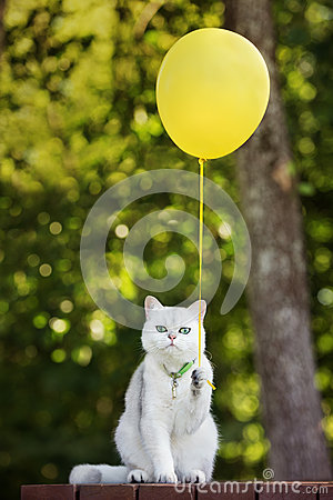 Free Funny White Cat Holding A Yellow Balloon Stock Photo - 57706380