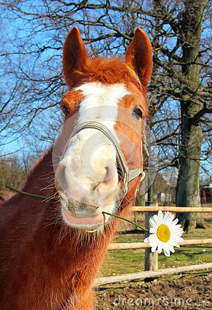 Free Funny Young Horse With A Camomile Stock Photos - 132678083