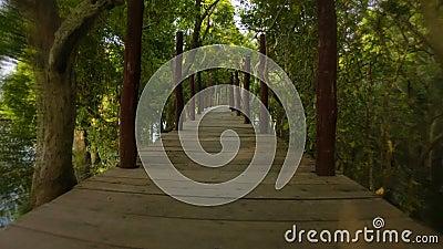 Funzionamento pericoloso su un alto ponte sopra il lago e la foresta Cambogia archivi video