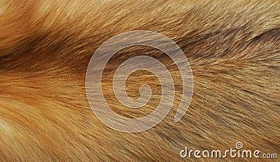 The fur