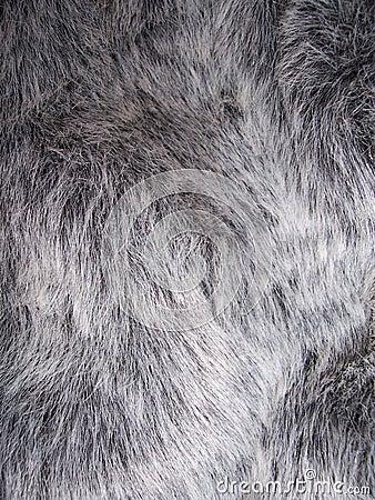 Free Fur Royalty Free Stock Photo - 305735