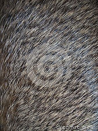 Free Fur Stock Photo - 305740