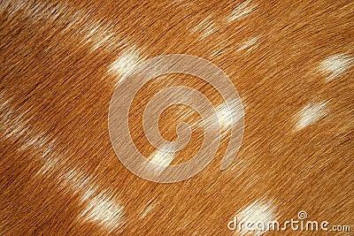 Fur of antelope