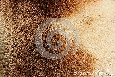 Fur Of Bear
