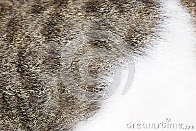 Fur of cat