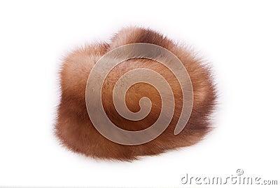 Fur of a marten