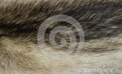 Fur of a raccoon