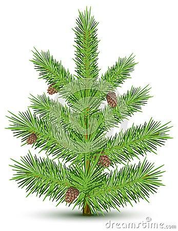 Fur-tree
