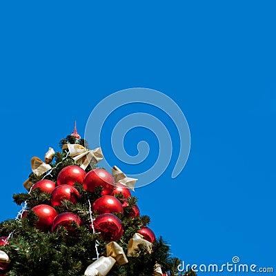 Fur tree with blue sky