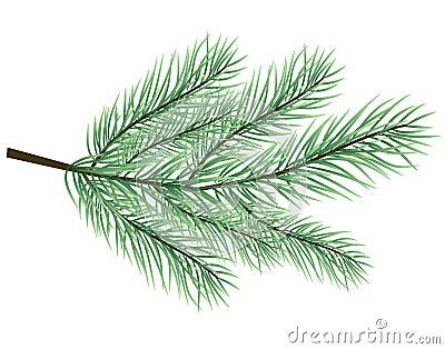 Fur-tree branch vector