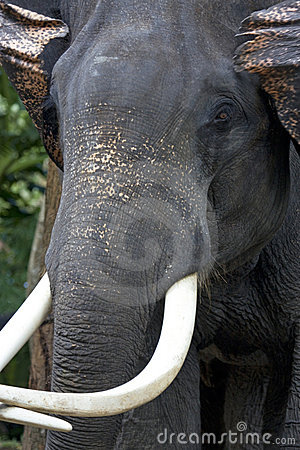Furious elephant