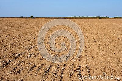 Furrows in the field