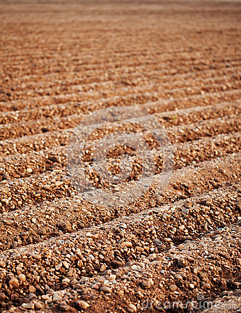 Furrows of a Plowed Field