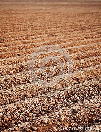 Furrows of a Plowed Field
